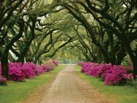 Tree Lined Driveway-Mississippi
