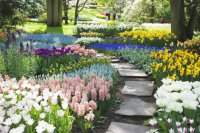 Vibrant Colorful Garden
