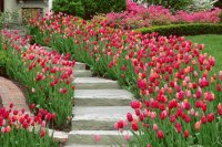 Winding Entry Stairs with Tulip Boarders