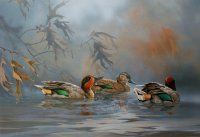 Morning Mist-Green Wing Teal