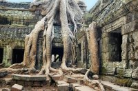 The Temple,Ta Prohm, Siem Reap, Cambodia