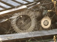 Spider webs in the woodpile