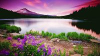 Purple Wild Flowers by Gorgeous Lake Setting