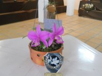 orquides