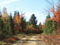 Fall colours on Old Mullin Stream Rd