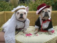 Cute Bride and Groom Dogs