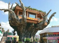 Treehouse Eatery in Japan