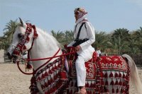 Arabian Horse Fashion Show in Bahrain