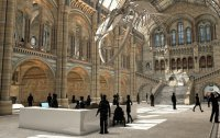 Museo de Historia Natural Hintze Hall