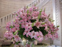 Pink lily arrangement, Umaid Bhawan Palace, India