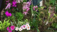 Royal Horticultural Society Flower Exhibit