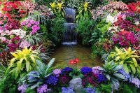 Gorgeous Waterfall Garden