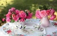 Gorgeous Pink Roses with Tea