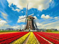 Tulips-Field-In-Holland.