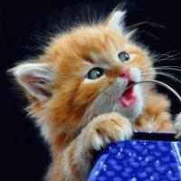 Lici cat