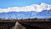 vineyards at the foot of the Andes
