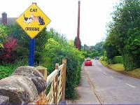 Cat Crossing in Stanton-by-Dale