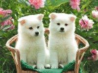 Os cachorros mais lindos!!!