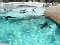 Penguins pool