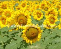 flores y plantas de ximena duque