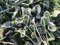 Frosty weeds even look nice