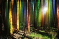 multicolour forest