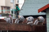 Squirrell yoga class