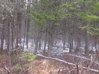 Apr 28 2018 - lots of snow in woods