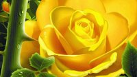yellow rose and thorn