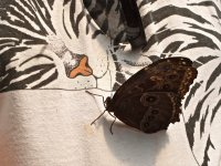 Butterfly on Shirt