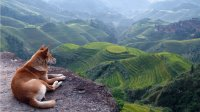 Dog enjoying view