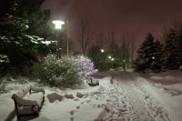 night snow scene