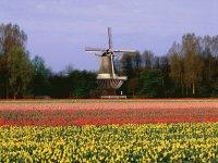 Jardin holandes