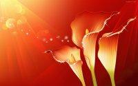 Flores e cenários abstratos