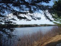 Spring on the banks of the Miramichi River