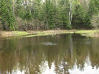 Early summer at the Little Dam, Miramichi