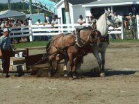 Horse pull at the Napan Fairground, NB