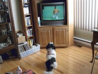 Watching the dog show