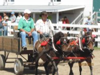 Showing ponies at the Napan Fair