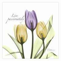 Tulips Live Passionately