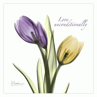 Tulips Love Unconditionally