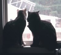 Kitties watching it snow